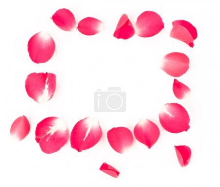 Photo for Rose petals isolated on white with blank space in the middle of the frame - Royalty Free Image