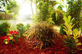Beautiful natural garden with colorful tropical plants