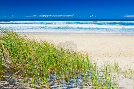 Grass and sandy beach on sunny day of Gold Coast