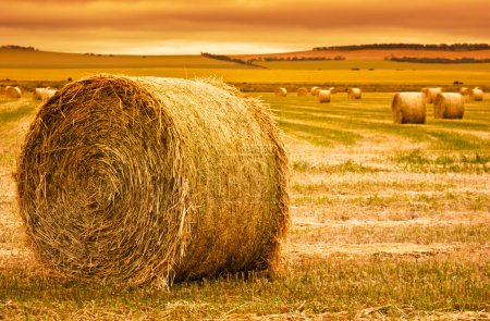 Photo for Focus on hay bale in the foreground in rural field - Royalty Free Image