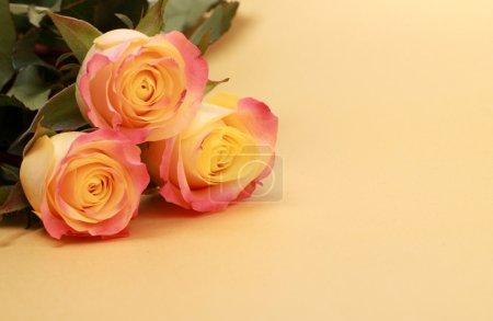 Photo pour Roses de belle couleur avec endroit vide pour votre texte spécial - image libre de droit