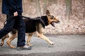 Mistr a jeho poslušný pes (německý ovčák)