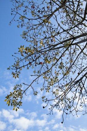 Photo pour Branches de coton - image libre de droit