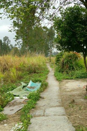 Photo pour Chemin d'accès dans un parc - image libre de droit