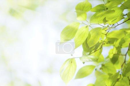 Foto de Hojas de color verde bajo luz del sol - Imagen libre de derechos