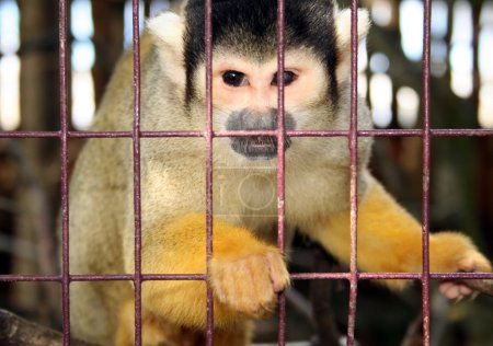 Monkey zoo laboratory cage