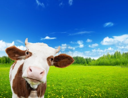 Photo for Cow and field of fresh grass - Royalty Free Image