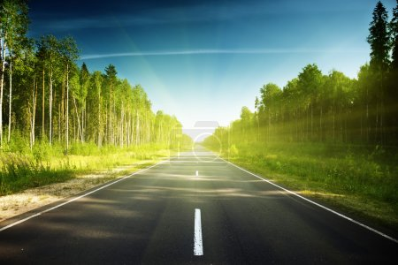 Photo for Road in Russian forest - Royalty Free Image