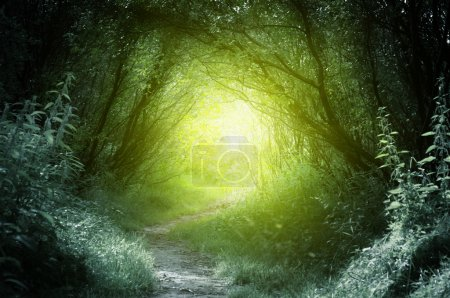 Photo for Way in deep forest - Royalty Free Image