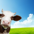 Cow and field of fresh grass...