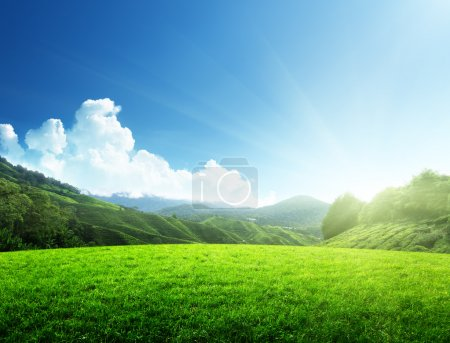 Photo for Field of spring grass and mountain - Royalty Free Image