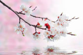 White spring flowers on a tree branch over pink bokeh background