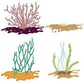 Mořské řasy izolovaných na bílém pozadí