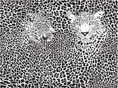 Leopard pattern background