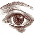 Old engraving illustration of open human eye...