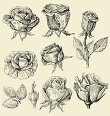 Vector set of a beautiful roses