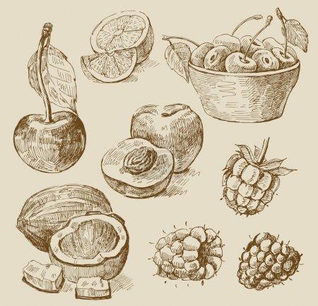 Fruit - illustration