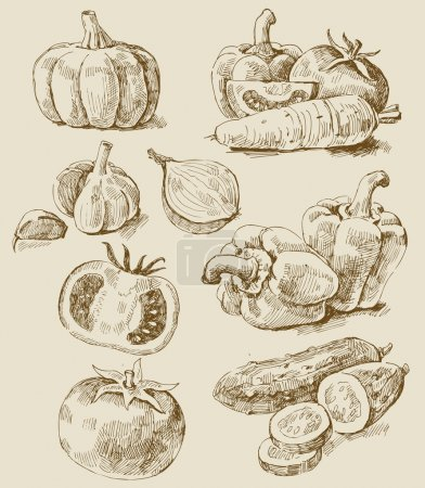 Photo for Vector vintage hand drawn of vegetables - Royalty Free Image
