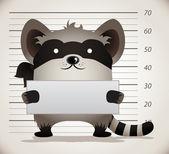 Raccoon Mug Shot