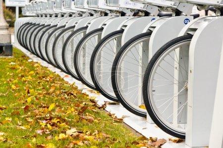 Row of Bicycle Wheels