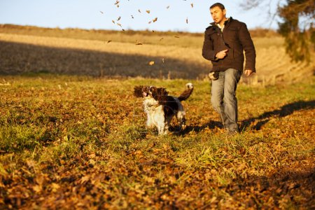 English Springer Spaniel chasing leaves
