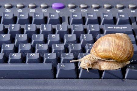 Snail on black computer keyboard