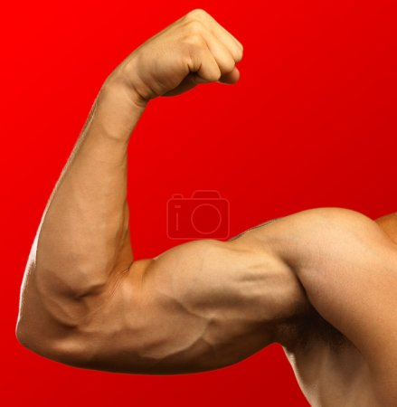 Photo for Strong biceps on a red background - Royalty Free Image