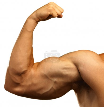 Photo for Strong biceps on a white background - Royalty Free Image