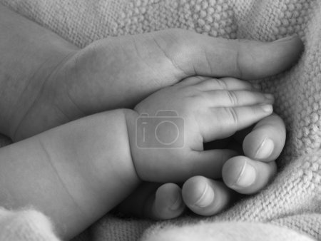 Photo for Adult hand holding a baby hand closeup, black and white - Royalty Free Image