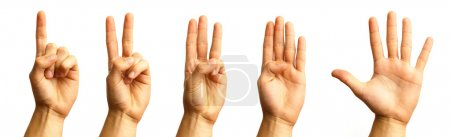 Photo for Hand gestures against a white background - Royalty Free Image
