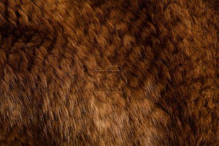 Photo pour Texture vison - image libre de droit