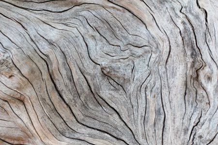 Photo for Detail of old wood texture - Royalty Free Image