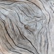 Detail of old wood texture...