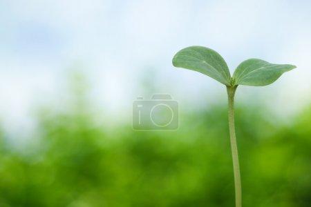 Photo pour Semis d'arbre sur fond de printemps - image libre de droit