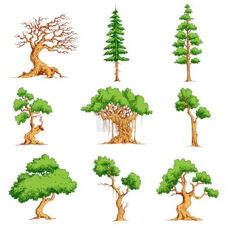 Illustration pour Illustration de l'ensemble de l'arbre sur fond blanc isolé - image libre de droit