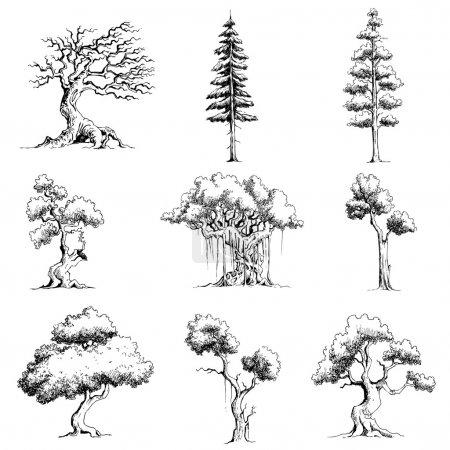 zestaw drzewa