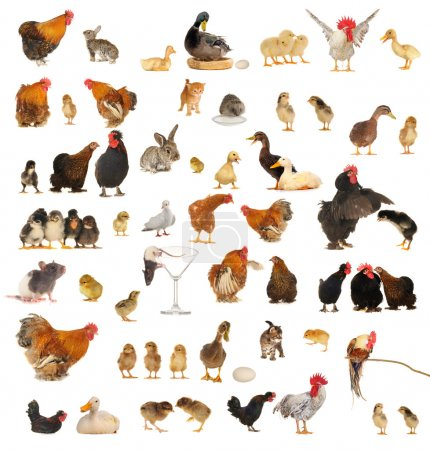 Histories about animals which live on a farm...