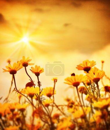 Photo pour Champ de marguerite fraîche jaune, fleurs printanières fleuries au coucher du soleil chaud, prairie de fleurs sauvages, clairière paisible, belle plante de jardin, arrière-plan vintage floral naturel avec lumière du soleil, photo de style rétro - image libre de droit