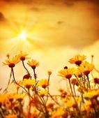 "Постер, картина, фотообои ""Цветы над теплый закат"""
