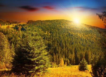 Photo pour Les bois coloré coucher de soleil dans les montagnes de forêts, paisibles paysage europe campagne, scène de la belle nature, des sapins à feuilles persistantes et sans nuages chauds - image libre de droit