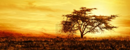 Photo for Big African tree silhouette over sunset, single tree on the field, beautiful panoramic image of nature at Africa, summer evening peaceful landscape of Masai Mara - Royalty Free Image