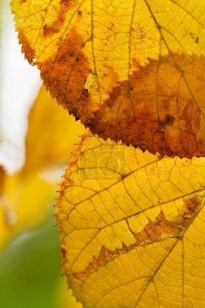 Beautiful leaves on a tree