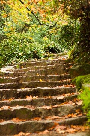 Photo pour Vue sur le magnifique parc de la région de Monchique, Algarve, Portugal . - image libre de droit