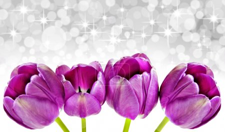 Photo for Spring background of pink tulips with star background - Royalty Free Image