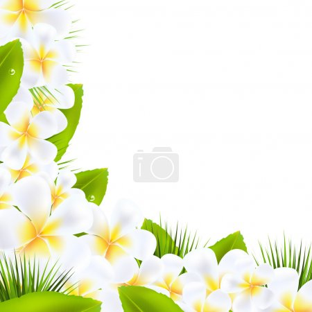 Frangipani Flowers Borders With Leaf