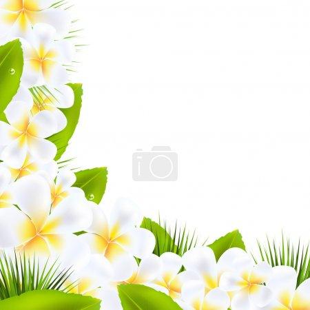 Illustration for Frangipani Flowers Borders With Leaf, Vector Illustration - Royalty Free Image