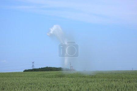 Photo pour Arrosage des champs de blé en été - image libre de droit