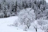 Těžký sníh v idaho