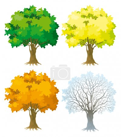 Illustration for Trees with green, yellow and orange leaves. Tree without leaves at winter. - Royalty Free Image