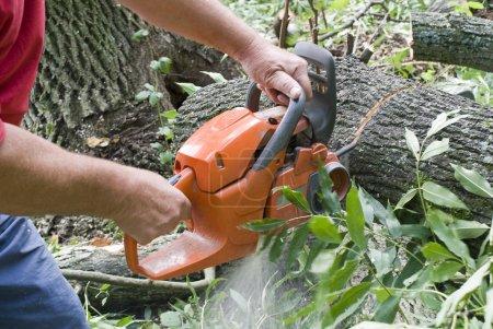 Photo pour Couper des arbres dans la forêt de tronçonneuse - image libre de droit